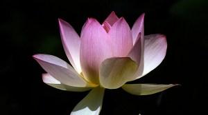 American Meditation Institute AMI MEDITATION