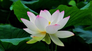 American Meditation Institute Intro to AMI MEDITATION 1