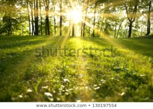 sunlight green forest spring time 450w 130197554